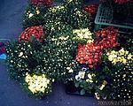 Stánek s květinami